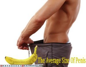 What Is The Average Size Of Penis?
